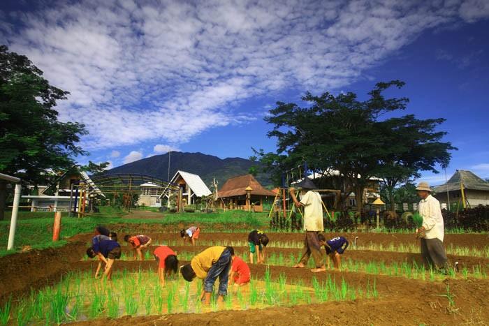 pertanian dan membajak sawah 2