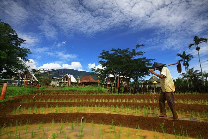 pertanian dan membajak sawah 4